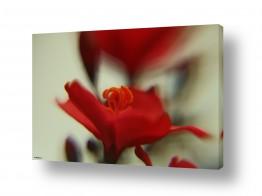 צמחים עלה | אישה באדום