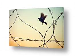 תמונות לפי נושאים גדר | לחופש נולדה