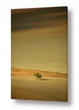 תמונות לפי נושאים עמק | העץ הנדיב