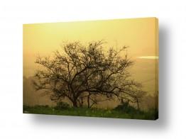 מיים אגמים | חוכמת העץ