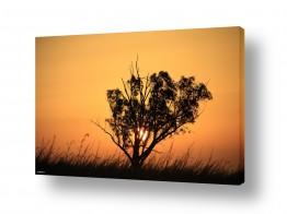 תמונות לפי נושאים עשבים | העץ