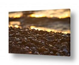 תמונות לפי נושאים זהב | על שפת הים
