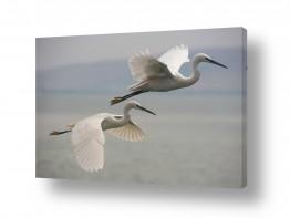 חיות ציפורים | לעוף
