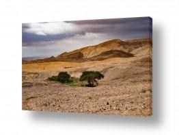 נוף חול | שני עצים בנגב