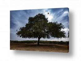 צילומים שמים | עץ השדה