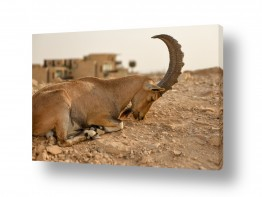 צילומים ארץ ישראלי | יעל בראשית