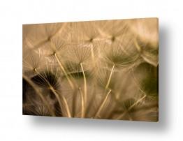 צבעים פופולארים צבע חימר | זהב