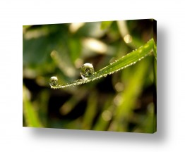 צילומים צילום תקריב   שדות בטיפות