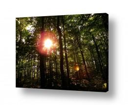 צילומים מזג-אוויר | שמש ביער