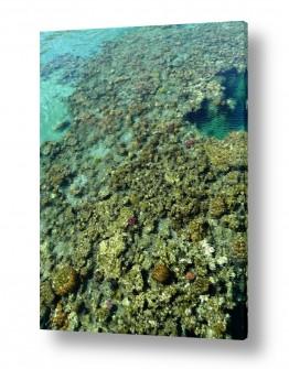 ימים ואגמים בישראל הים האדום | אלמוגים אבסטרקט