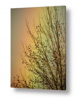 תמונות לפי נושאים קשת | פקאן בצבעי הקשת