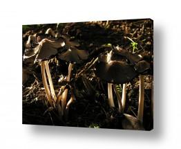צמחים פטריה | תאורת בוקר