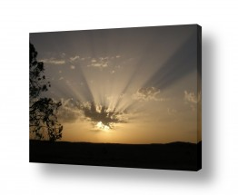 תמונות לפי נושאים אקליפטוס | בוקר מדברי