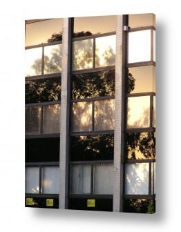 תמונות לפי נושאים אקליפטוס | בניין אקליפטוס
