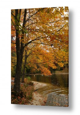 צילומים שוש אבן | שלכת על האגם