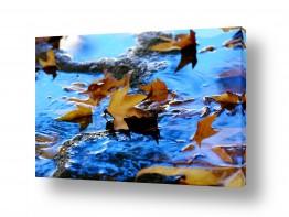 צילומים שוש אבן | צף במים