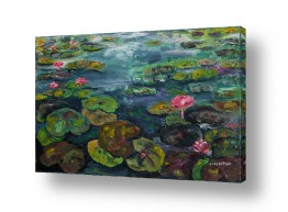 ציורים מים | פריחת פרח הלוטוס