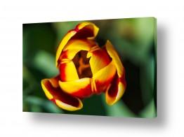צילומים צילום תקריב | צבעוני