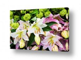 צילומים טניה קלימנקו | פסטיבל הפרחים בהולנד