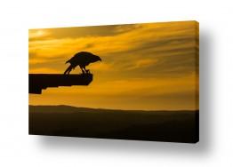 צילומים שמים | פלקון והקרן השמש האחרונה