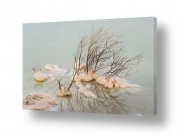תמונות לבית | ים המלח