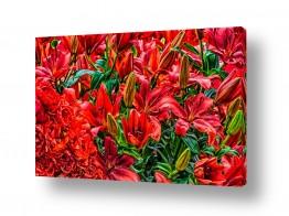 תמונות לבית | פרחים אדומים בהרכב