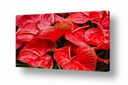 תמונות לסלון | פרחים אדומים בהרכב