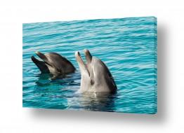 חיות מים דולפין | ריף הדולפינים