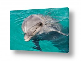 צילומים בעלי חיים | דולפין