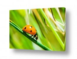 תמונות לפי נושאים מדשאות | פרת משה רבנו