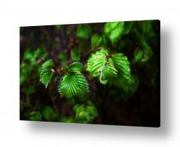 צילומים טניה קלימנקו | עלים ירוקים