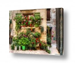 חלונות אדן החלון | פרחים לשבת