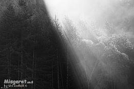 קרני שמש בערפל בוקר