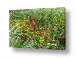 צומח פרחים | פריחה באדום צהוב
