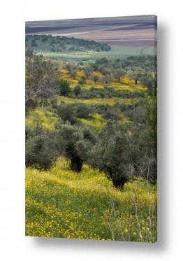 נוף שדות | החיים בצהוב