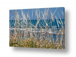 צילומים אורי לינסקיל | שבולים מול הים