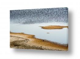 נוף חול | גלונים