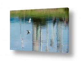 צילומים טבע | רידינג