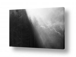 עץ גזע | קרני שמש בערפל בוקר