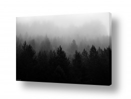 צבעים שילובים של צבע שחור | עצים