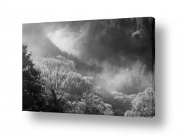 שמים עננים | עצים בענן