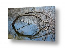 מיים אגמים | עץ טובל