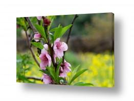 צמחים פרחים | פרחים ורודים