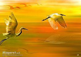 ציפורים במעוף צהובה