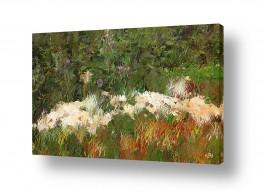 פרחים רקפת | אבני הכרמל