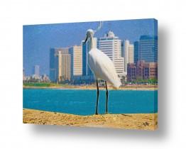 ציורים בעלי חיים | תל-אביב