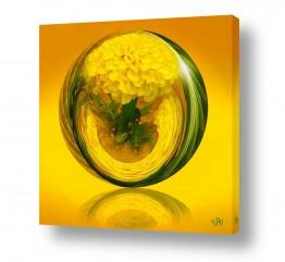 ציורים טבע דומם | צהוב אהוב