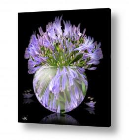 ציורים טבע דומם | פרחים באגרטל