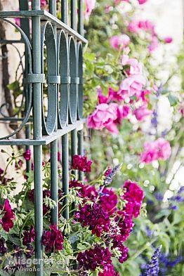 חלון עם פרחים