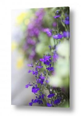 צילומים צילום תקריב   צבעים מתוקים